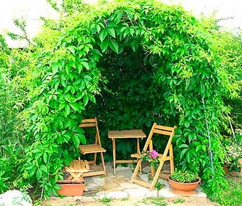 Вьющиеся растения для беседки