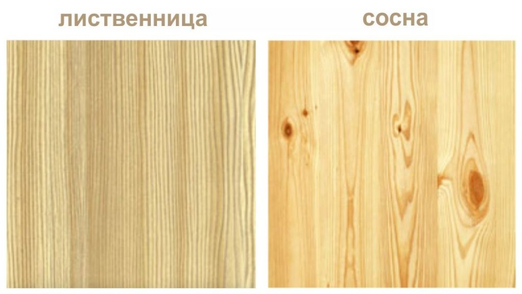 Сосна или лиственница